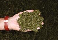 製造過程で発生する大量の「茶かす」